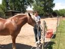 Freundschaftlich mit dem Pferd