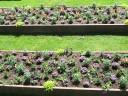 Die Gartenschau