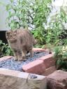 ernährt sich von Mäusen