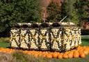 Schildkröten-Formation b
