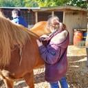 Pferd striegeln